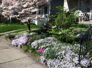 Yard in bloom